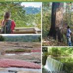 Hiking Atlanta's Hidden Forests