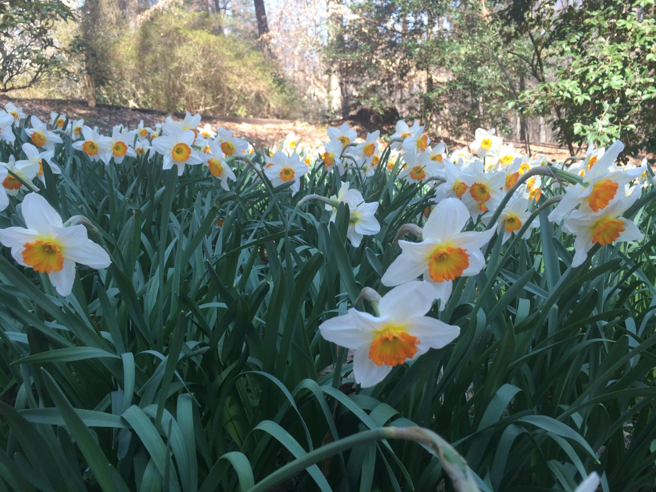 Woodland Gardens Hiking Atlanta 39 S Hidden Forests Intown And Out