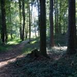 Emma Millican Park